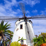 Windmill with tropical plants in Tenerife_402536932
