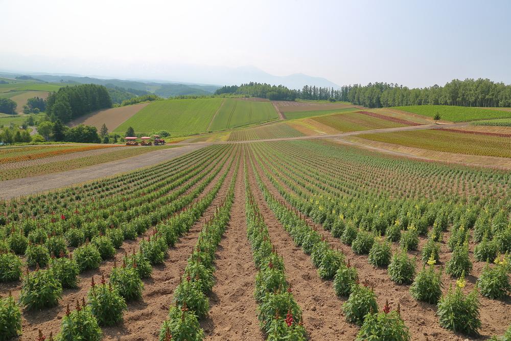 landscape of Hokkaido Japan_442029823