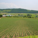 landscape of Hokkaido Japan_442029838