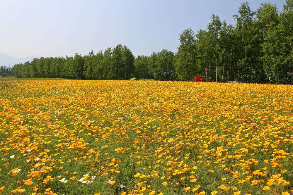 landscape of Hokkaido Japan_442029844