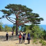 Bay of Telyakovsky near centuries-old pine trees_421095937