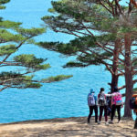 Bay of Telyakovsky near centuries-old pine trees_427036288