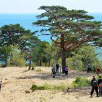 Bay of Telyakovsky near centuries-old pine trees_417678652