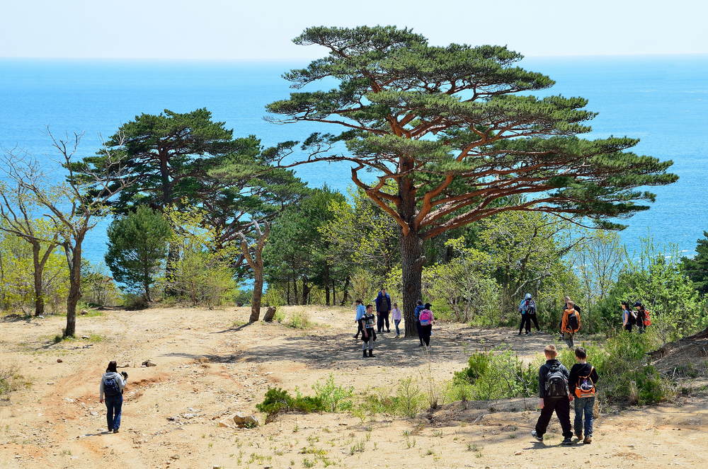 Bay of Telyakovsky near centuries-old pine trees_417678652