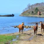 Horses in the Bay Vityaz_431450863