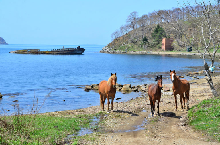 Gamova peninsula, the Rural View of Russia