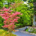 Blooming bush at Nikko heritage site _428657158