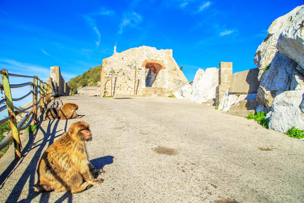 Alameda Wildlife Conservation Park in Gibraltar_431057734