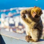 Alameda Wildlife Conservation Park in Gibraltar_242036647