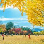 autumn around Nami Island_332443214