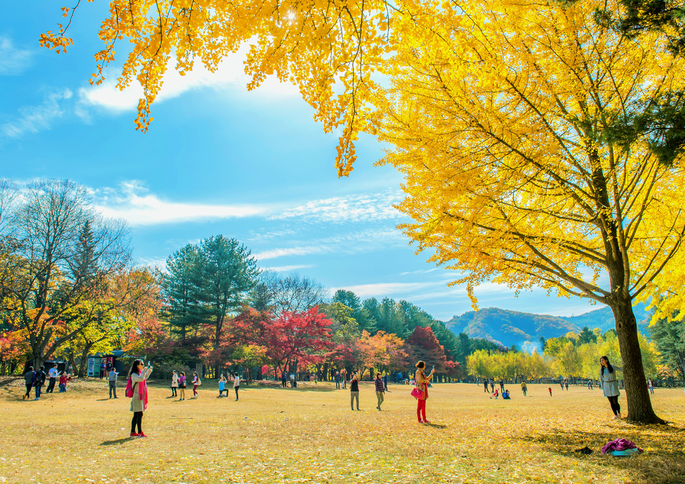 autumn around Nami Island_332443214