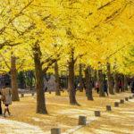autumn around Nami Island_332443394