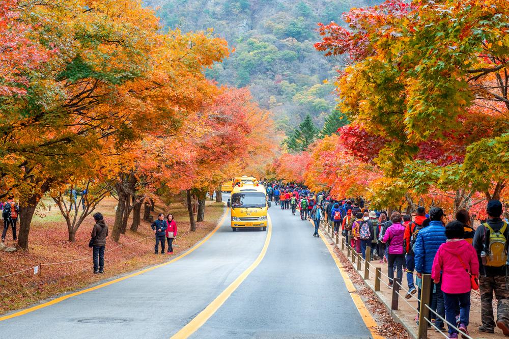 Naejangsan park_334111295