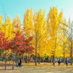 photos of the beautiful scenery in autumn around Nami Island_332443433