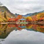 beautiful scenery around Naejangsan park_334104713