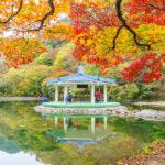 around Naejangsan park_334111325