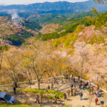 Cherry blossoms at Yoshino Mountain _381601141