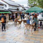 Tourists and wild deer in Nara_195746762