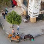 horse cart oranges vendor_415313896