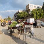 Donkey standing on street _415313917
