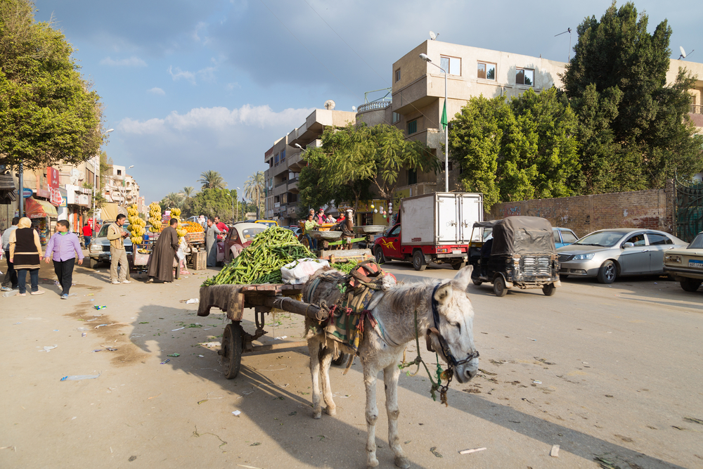 Donkey standing on street _415313917