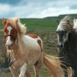 Icelandic countryside_447814414