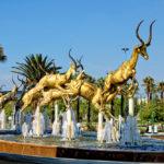 jumping gold springboks_387867307