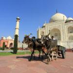 front of the Taj Mahal _454270894