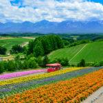 flower field at Shikisai-no-oka, Biei_456781300
