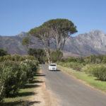 Stellenbosch wine route_439930786