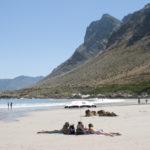 Rooi Els on the Cape Whale Coast _351579656