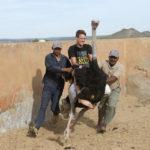 ostrich farm visitor centre in Oudtshoorn _359658449