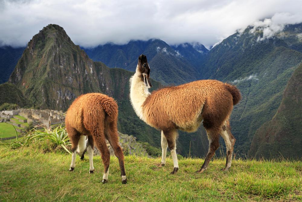 Machu Picchu_228804451