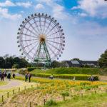 Tourists at Hitachi Seaside Park_473003701