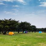 Tourists at Hitachi Seaside Park_472968580