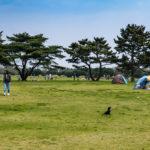 Tourists at Hitachi Seaside Park_472968493