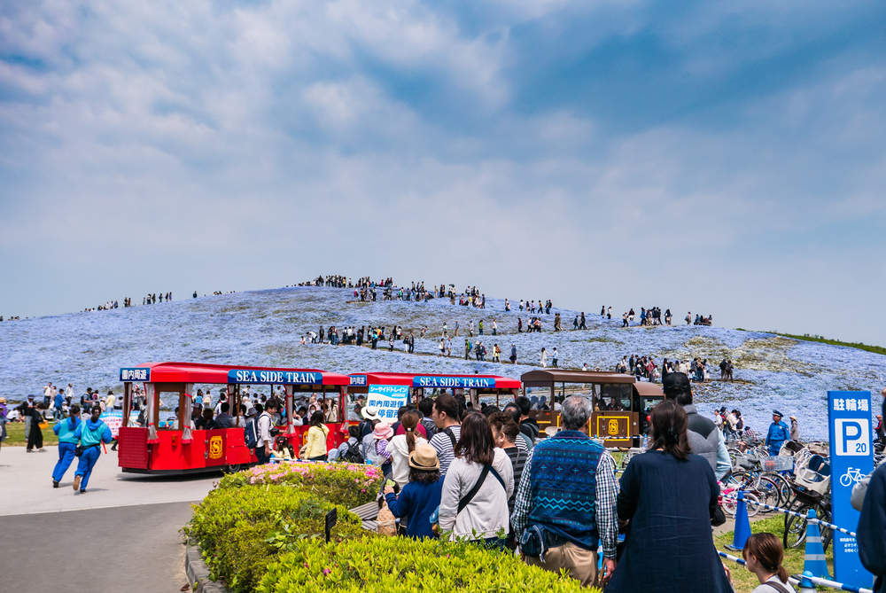 Tourists at Hitachi Seaside Park_472960171