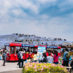 Tourists at Hitachi Seaside Park_472960174