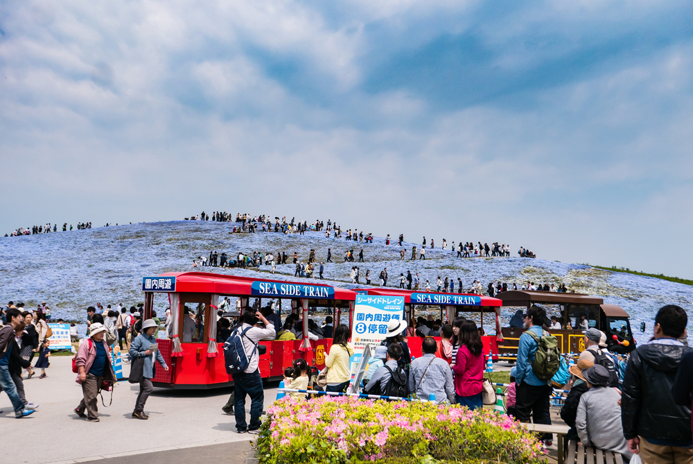 Tourists at Hitachi Seaside Park_472960174