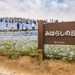 Miharashi hill at Hitachi Seaside Park_472959058