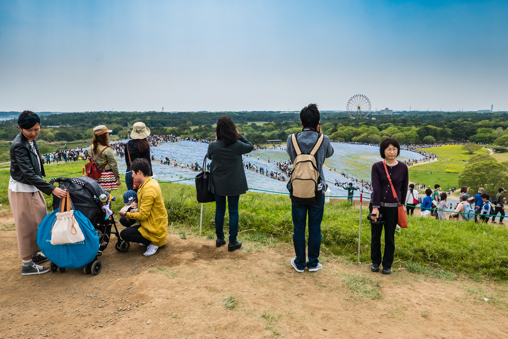 Tourists at Hitachi Seaside Park_472947682