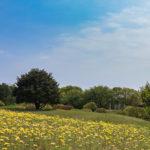 Garden in Hitachi Seaside Park in Ibaraki_472968442