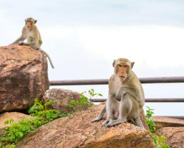 Sisaket, Exploring the Natural Thailand