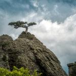 lonely-tree-on-a-rock-in-the-demerdji-mountain_451489621