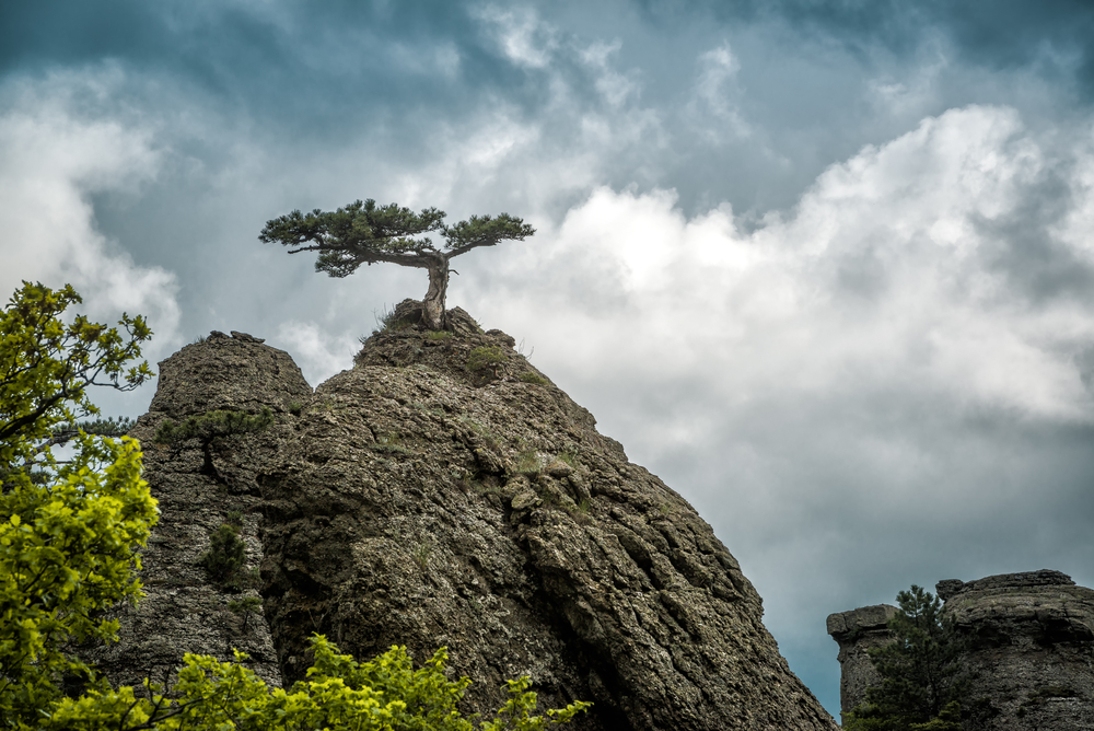 lonely-tree-on-a-rock-in-the-demerdji-mountain_451489621