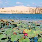 lotus-lake-in-mui-ne_502019131