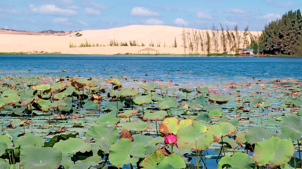 lotus-lake-in-mui-ne_502019131