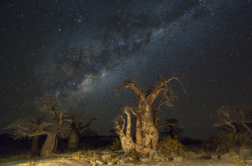 baobab-trees-and-the-milkyway_466126301
