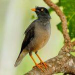 taveuni-island_521631946