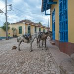 Horses in the streets of Trinidad_558159820